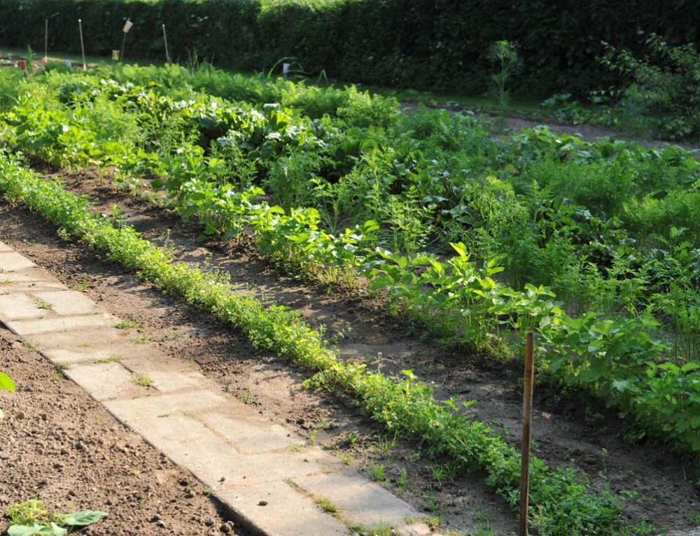 Grøntsager fra egen urtehave