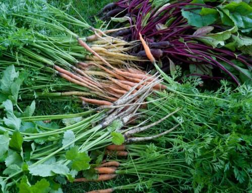 Sprøde og velsmagende grøntsager