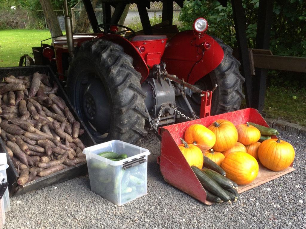 Friske grøntsager hentet i køkkenhaven til Pihlkjær Restaurant